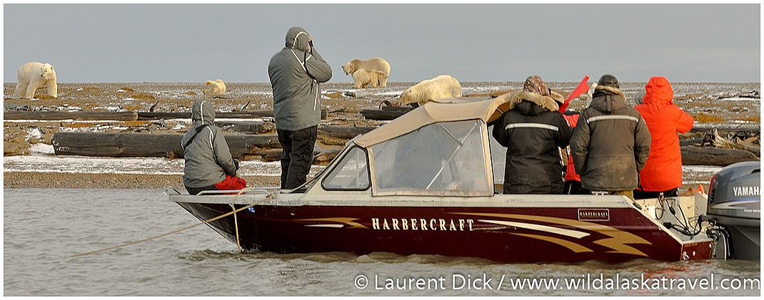 #1 Alaska Polar Bear Tour