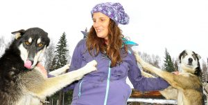 Alaska Dog mushing experience and Kennel Tour