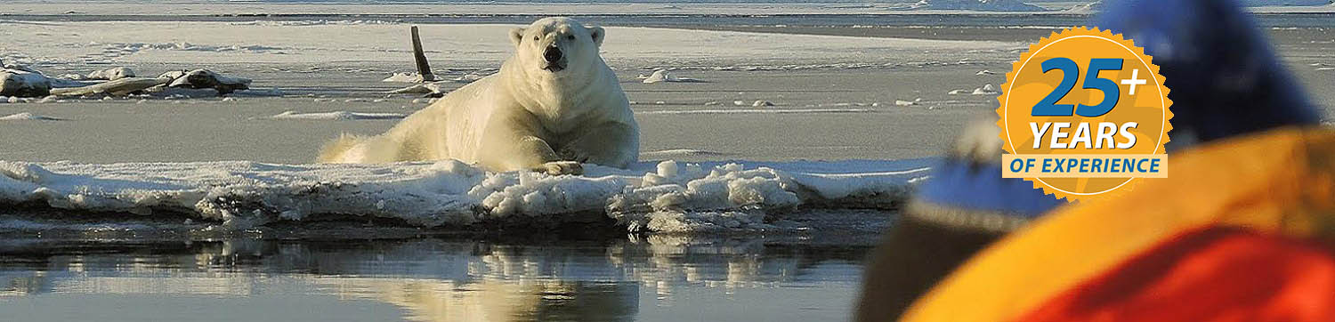 Alaska Polar Bear Tours