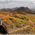 03-Experience-Denali-National-Park-with-Wild-Alaska-Travel