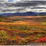 04-Fall-Colors-Denali-National-Park-Photo-c-Laurent-Dick