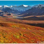 05-Denali-National-Park-Fall-Colors-Photograrphy-Tour-c-Laurent-Dick-Wild-Alaska-Travel