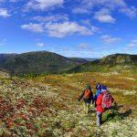 10-Camp-Ridge-Kantishna