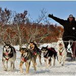 Alaska-Iditarod-Finish-and-Northern-Lights-Tour-Photo-c-Laurent-Dick-Wild-Alaska-Travel