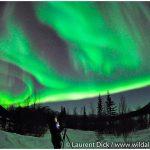 Alaska-Northern-Lights-Tour-in-Wiseman-Photo-c-Laurent-Dick-Wild-Alaska-Travel