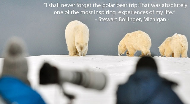 Alaska-Polar-Bear-Viewing-and-Photo-Tour1