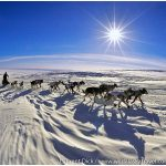 Aliy-Zirkle-Cape-Nome-Iditarod-2015-Photo-c-Laurent-Dick-Wild-Alaska-Travel