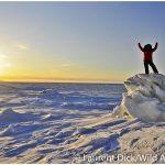 Bering-Sea-Ice-c-Laurent-Dick-Wild-Alaska-Travel