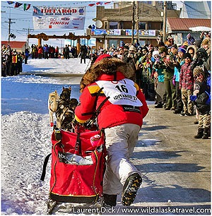 Highlights Iditarod Finish Tour Mitch Seavey Iditarod Champion Photo cLaurent Dick