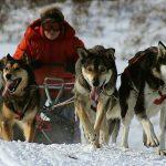 Iditarod-Dog-Mushing-with-Wild-Alaska-Travel