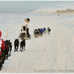 Jason-Mackey-Lance-Mackey-Iditarod-Nome-Photo-c-Laurent-Dick-Wild-Alaska-Travel