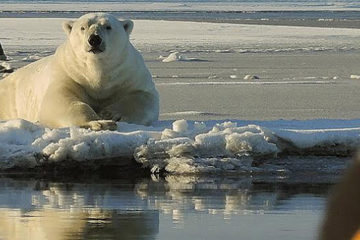 Alaska Polar Bear Tour with Wild Alaska Travel