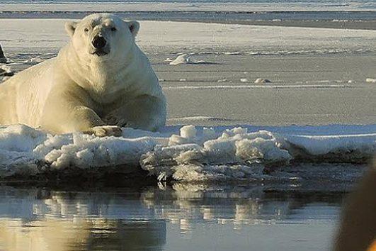 Alaska Polar Bear Tour with Wild Alaska Travel